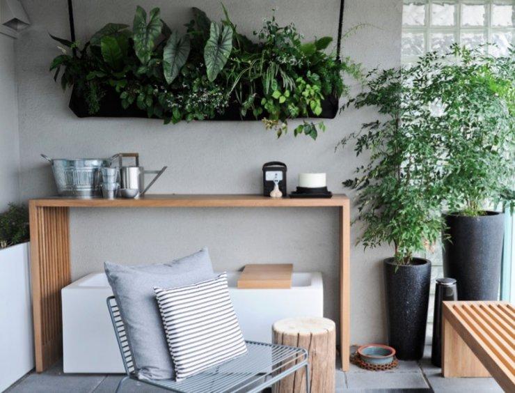 trang trí phòng trọ bằng cây xanh