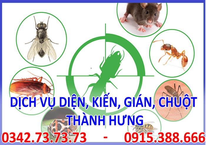 Dịch vụ diệt, kiến, gián, mối, chuột tại Hà Nội